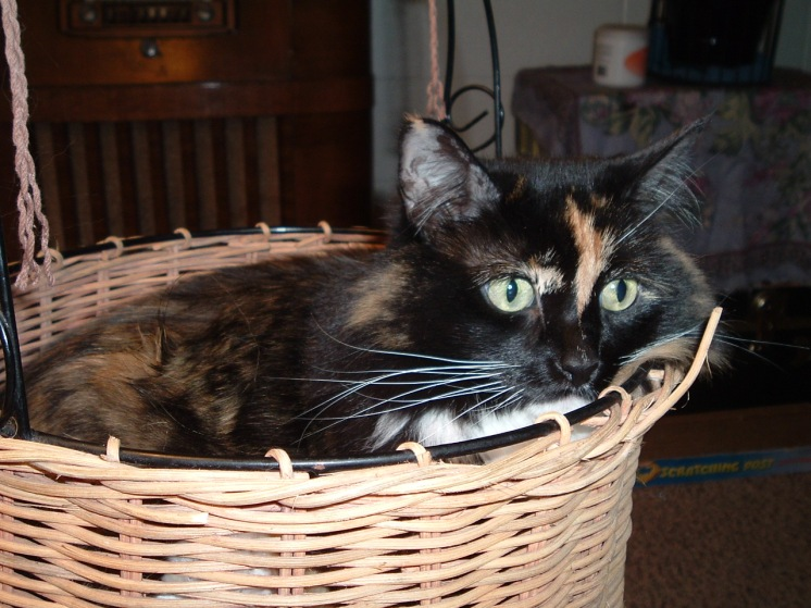 MK in a Basket