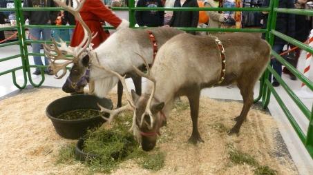 Santa's Backup Reindeer