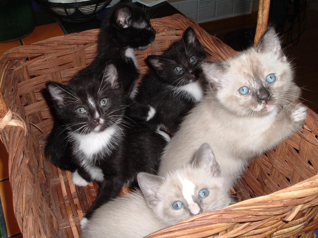 Kitten Best