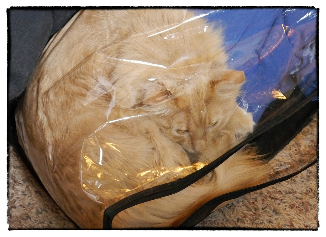 Kitty in a bag2