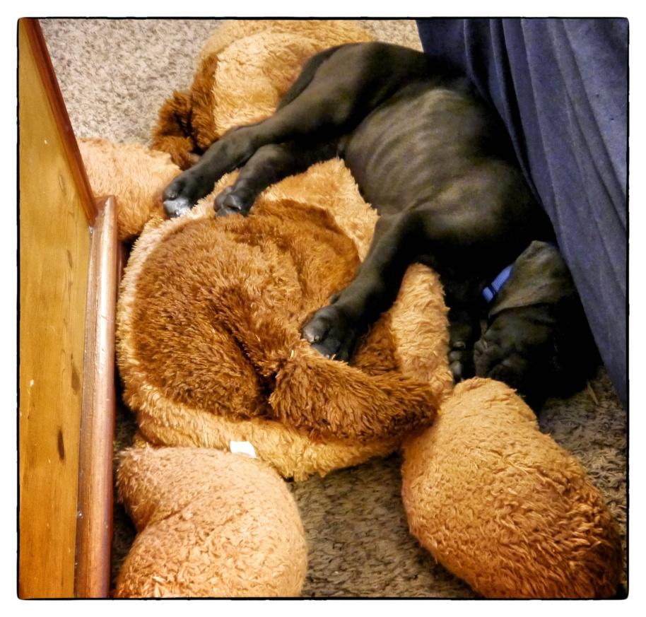 Bixby Sleep