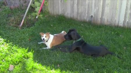 Bixby and Tater