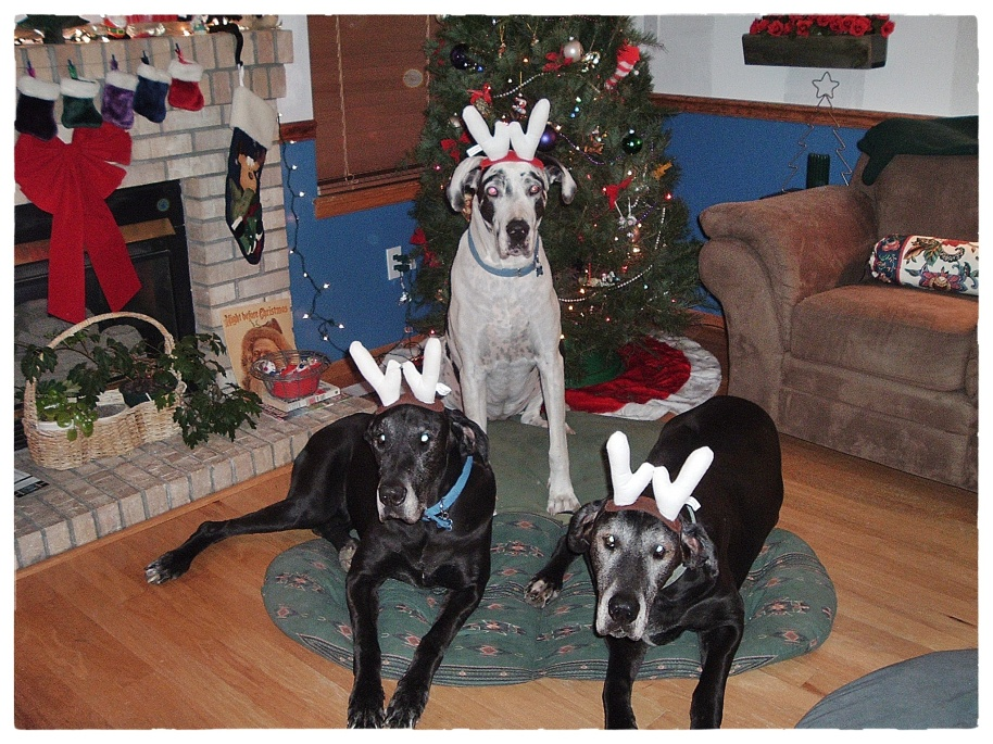 Christmas Dogs 2004 Shelby Einstein Duncan