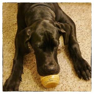 Puppy peanutbutter1