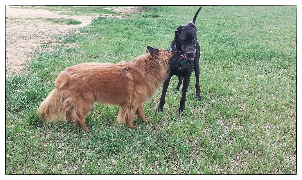 Bixby and Kodiak April 2015a