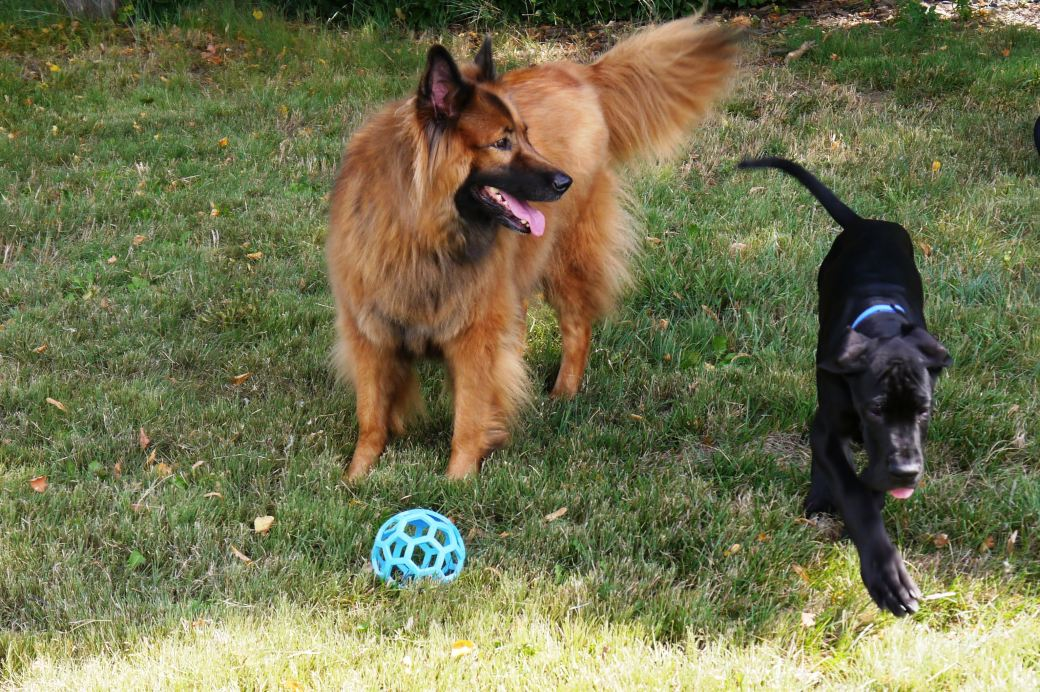 Bixby and Kodiak Sept 2014