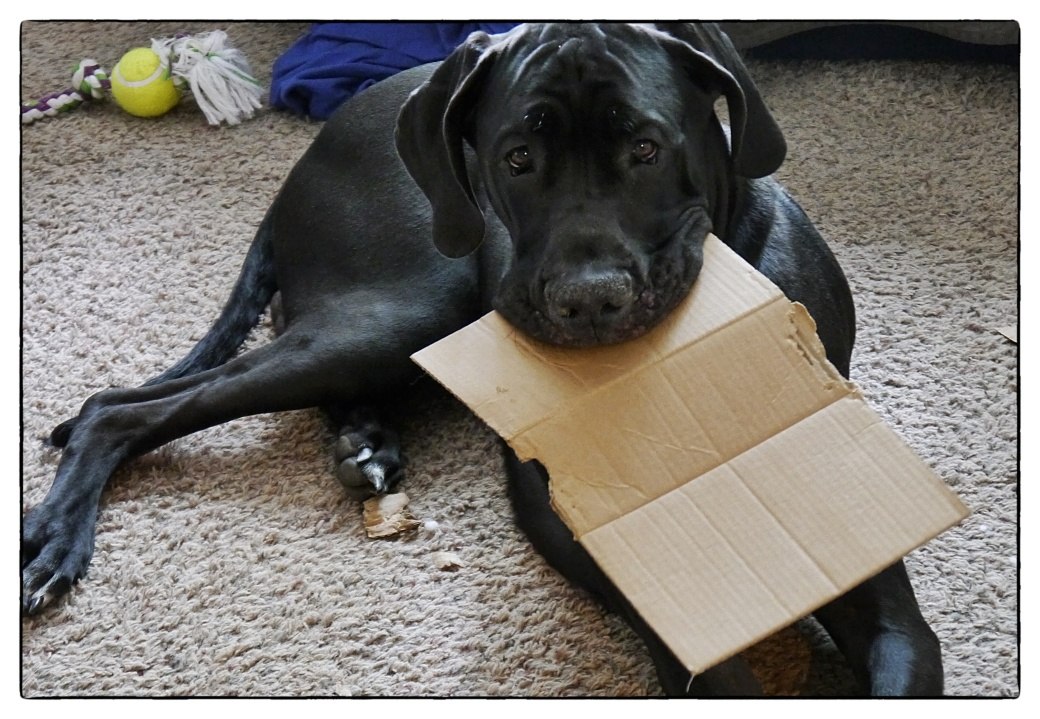 Can't have my box1