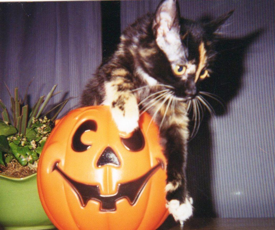 Emma Pumpkin