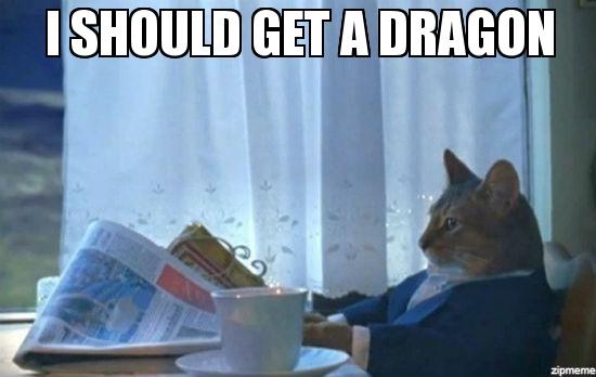 I should get a dragon