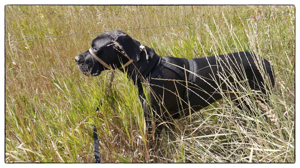 Puppy in the tall Grass