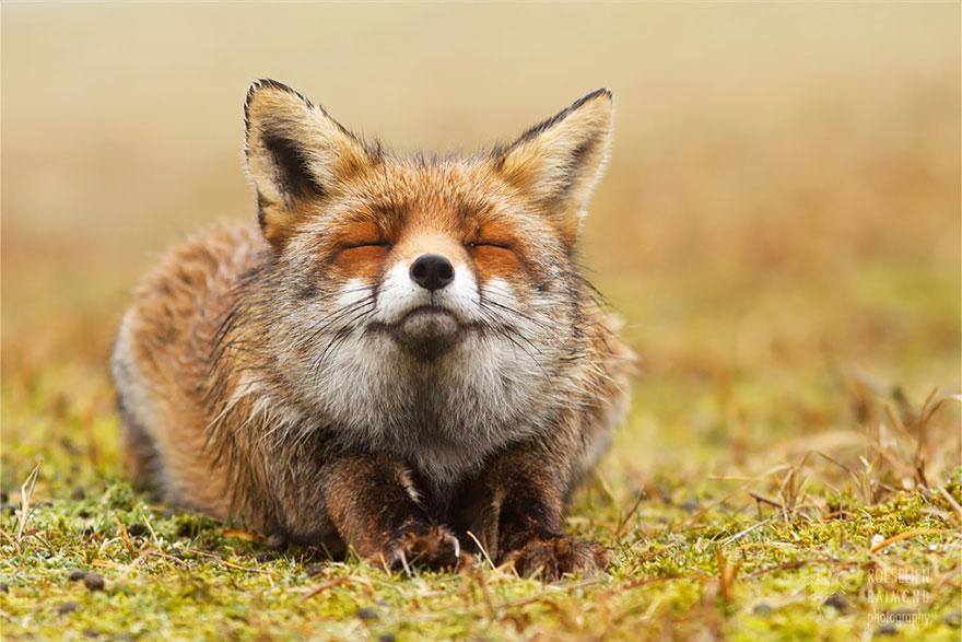 zen-foxes-roeselien-raimond-3__880