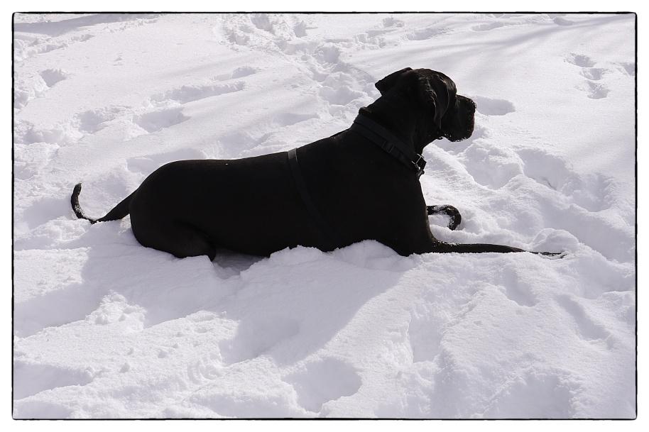 Bixby Snow dog