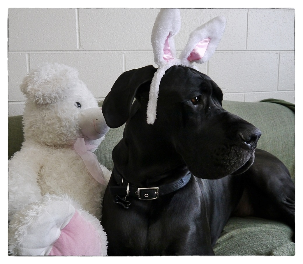Happy Easter from Bixby Bunny16