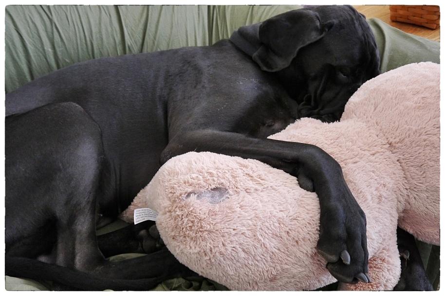 Bixby and His Bunny 4 1 16