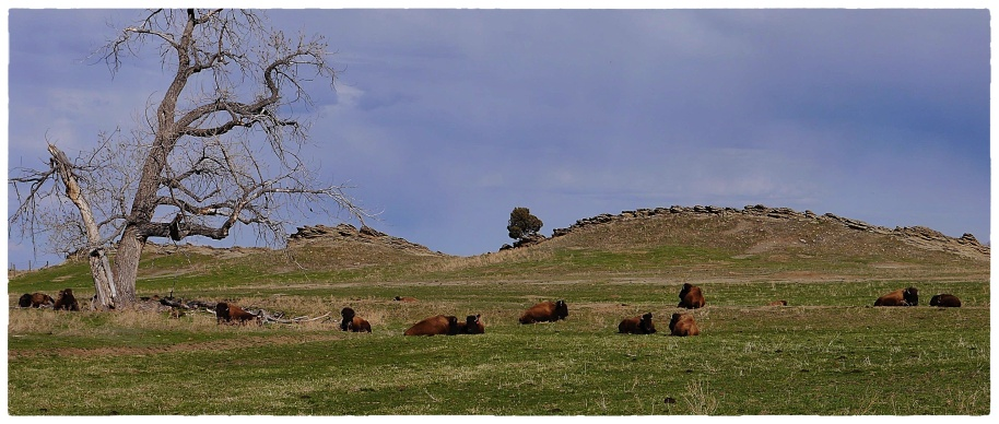 Buffalo Hill2s