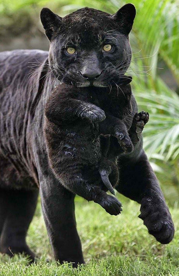 animals-carrying-their-baby-29
