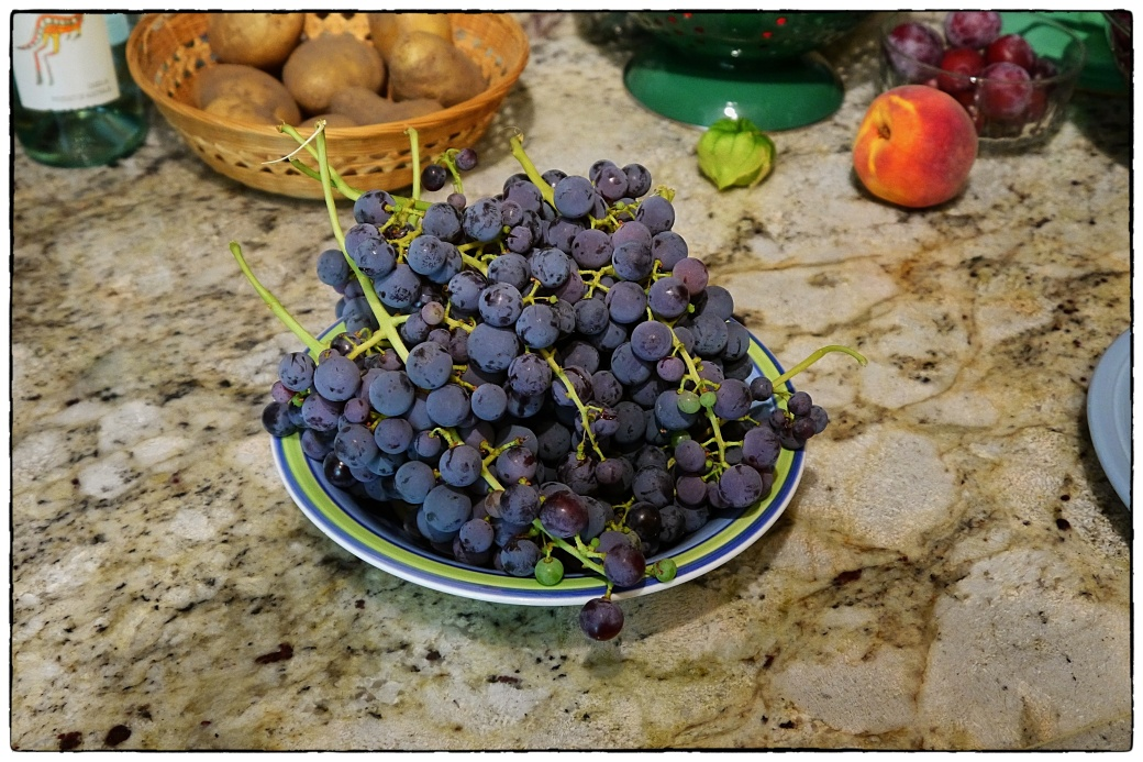 Grapes of August