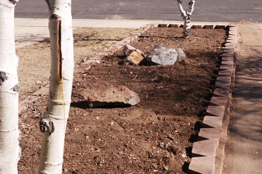 garden-cleared-2