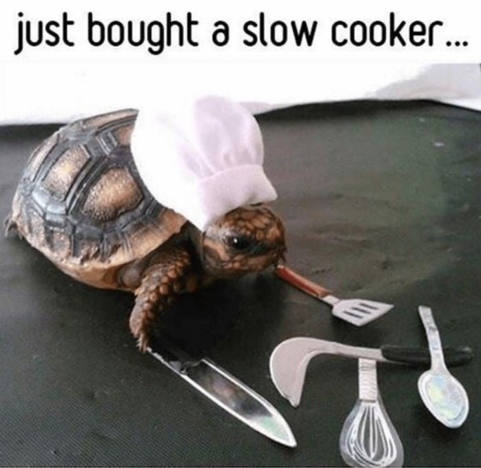 turtle in chef's hat